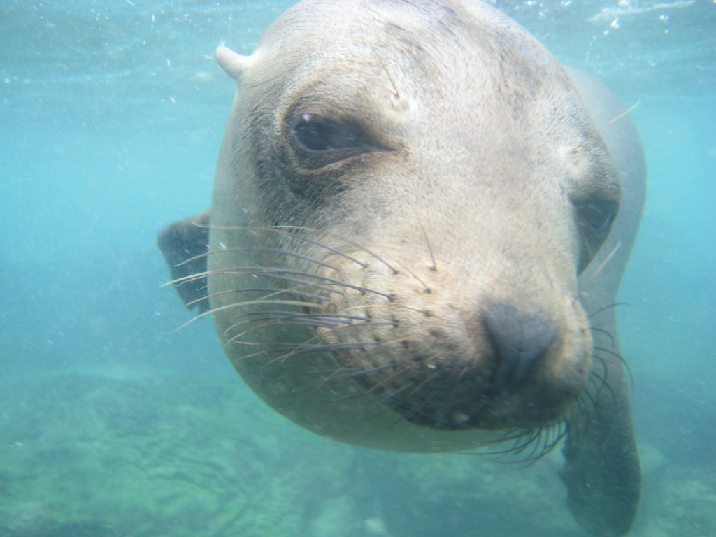 19 santa fe zeeleeuw