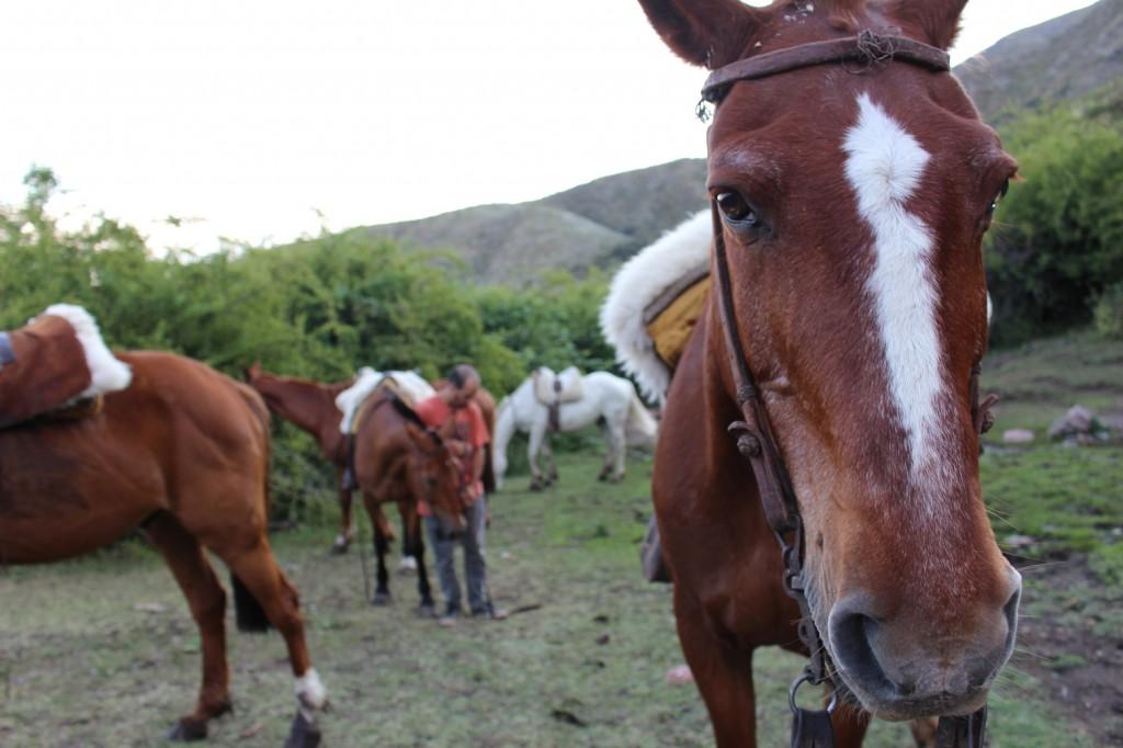 18_paard